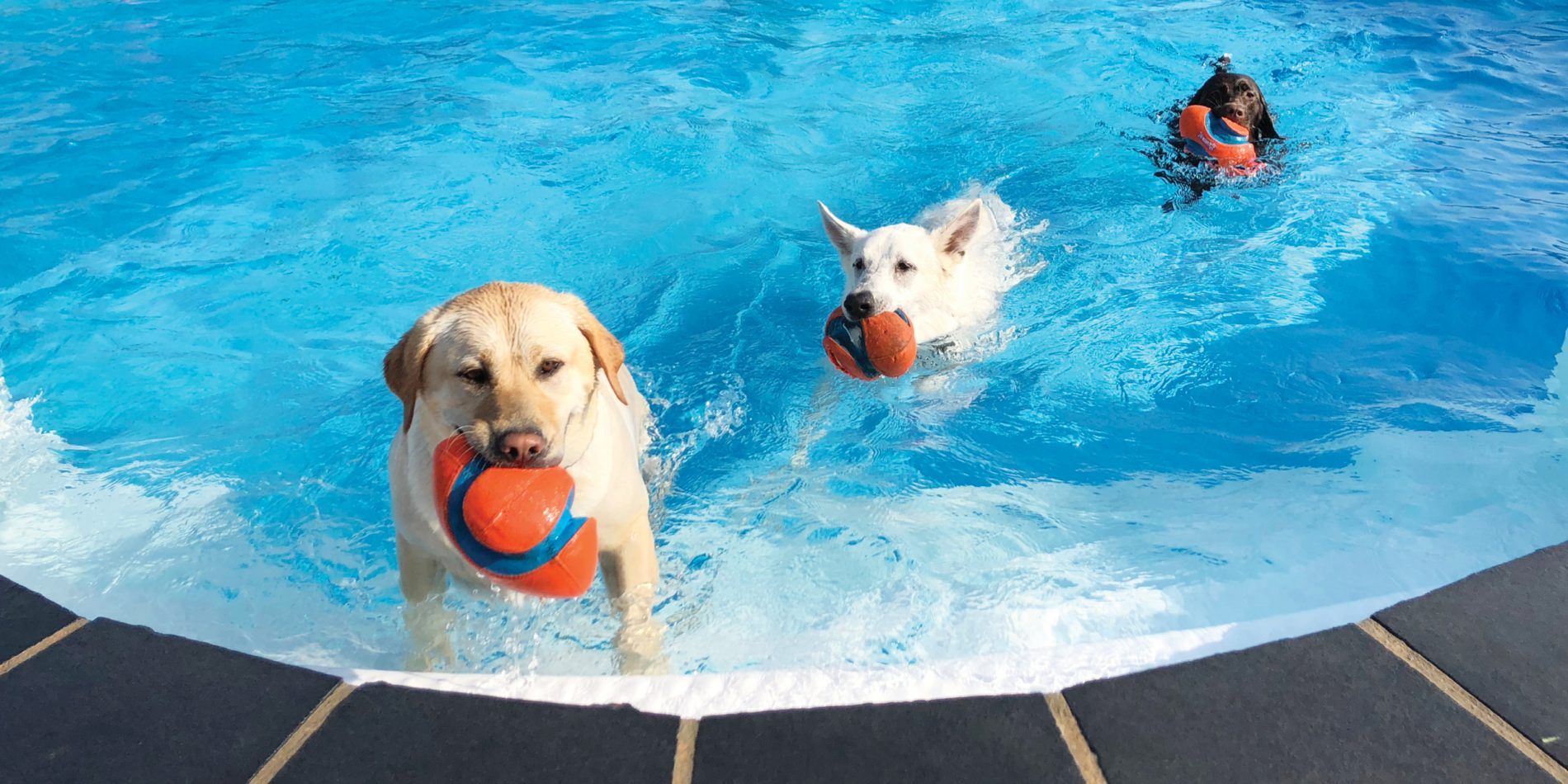 Book Your Pup in for a Swim Today!